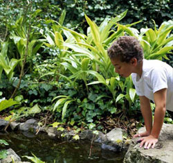 Preformed Countertops For Sale Bait Preformed Pond Preformed Bio Ponds For Sale