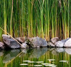 Bog filters for Pond veggie filter